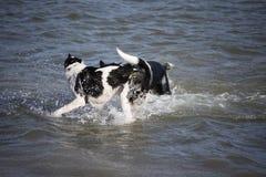 Beide Mädchen, die ein Schwimmen genießen stockbild