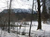 Beieren in de sneeuw stock fotografie