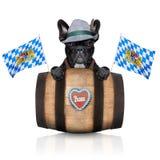 Beierse hond Stock Afbeeldingen