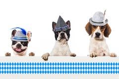 Beierse honden Royalty-vrije Stock Afbeeldingen