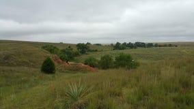 Beifuß und Bäume gegen rote Schmutz-Täuschungen Lizenzfreie Stockbilder