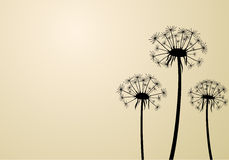 Beige background with dandelions. Royalty Free Stock Photo