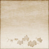 Beige background with grapevine drawing Stock Image