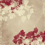 Beige background with leaves. Beige and cappuccino coloured square background with cream and dark red leaves. Floral elements, grungy feel Stock Photo