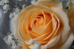 Beige Blumen Stockbild
