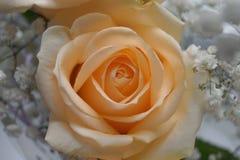 Beige Blumen Lizenzfreies Stockbild
