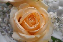 Beige Blumen Stockfoto