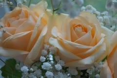 Beige Blumen Lizenzfreie Stockfotos