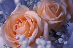 Beige Blumen Stockfotografie