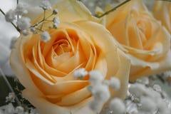 Beige Blumen Lizenzfreies Stockfoto