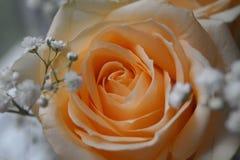 Beige Blumen Lizenzfreie Stockbilder