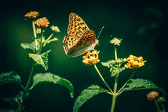 Beige and Brown Butterfly on Green Plant Stock Photo