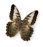 Beige butterfly isolated on white Royalty Free Stock Image