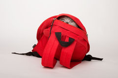 Beige cat in a red bag, on white background Royalty Free Stock Photos