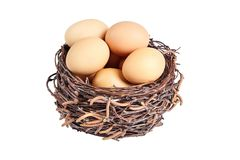 Beige chicken eggs in a basket. Of birch branches. Egg in the brown nest royalty free stock image