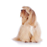 The beige decorative doggie sits on a white background. Royalty Free Stock Photos