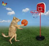 Dog plays basketball in meadow