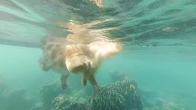 Beige dog, labrador, floats in the sea among coral reefs. View under the water. Slow motion. Andaman sea. Thailand stock video
