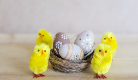 Beige easter eggs  in small nest with chickens Stock Image