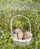 Beige easter eggs  in small white  basket Stock Images