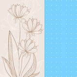 Beige flowers. Graphic beige flowers on blue and beige backgrounds Royalty Free Stock Images