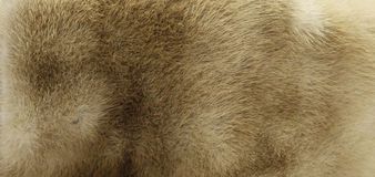 Beige fur texture Stock Images