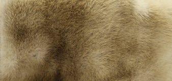 Beige Fur Texture Stock Images