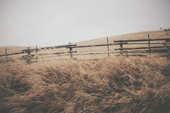 Beige Grass Near Brown Wood Fence Royalty Free Stock Photos