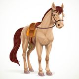 Beige horse saddled and in harness Stock Photography