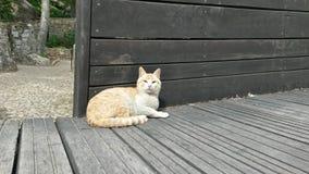 Beige Katze Lizenzfreie Stockfotografie