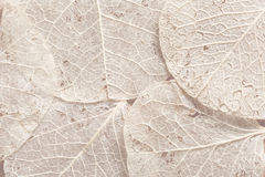 Beige leaves textured background Stock Image