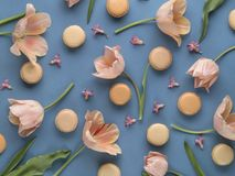 Beige french macaron. Beige macaron with pastel pink tulips on blue background, flat lay view Royalty Free Stock Photos