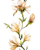 Beige magnolia flowers on a twig on white background. Seamless p Royalty Free Stock Photo