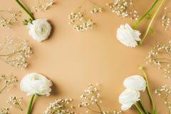 Beige mode, blommor lägger framlänges bakgrund royaltyfri foto