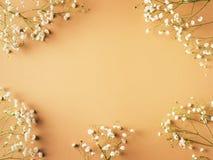 Beige mode, blommor l?gger framl?nges bakgrund royaltyfri foto