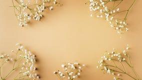 Beige mode, blommor l?gger framl?nges bakgrund arkivfoton