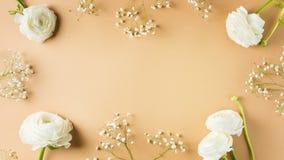 Beige mode, blommor l?gger framl?nges bakgrund royaltyfria foton