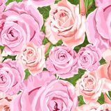 Beige and pink roses floral background. Pink and beige roses vector floral background for wedding invitations Stock Photography