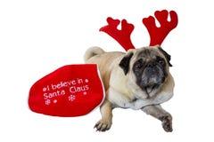 Beige Pug die Kerstmiskledij 10 dragen Royalty-vrije Stock Afbeelding