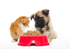 Beige puppy and kitten Royalty Free Stock Photos