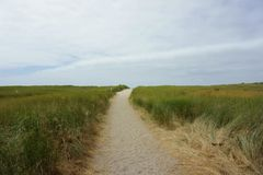 Beige Road in the Middle of Grass Photo Royalty Free Stock Images