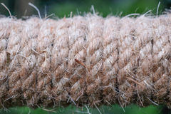 Beige rope on the wood Stock Image