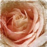 Beige Rose Shabby Background Stock Photo