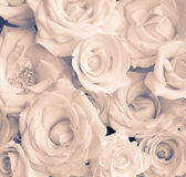 Beige roses Stock Photography
