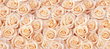 Beige roses seamless pattern Stock Image