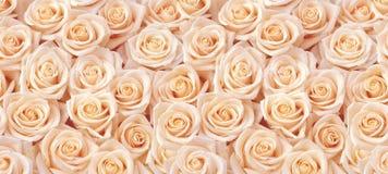 Beige roses seamless pattern. Beige roses horizontal seamless pattern stock image