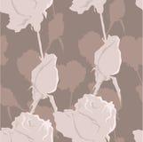 Beige rozen Stock Afbeeldingen