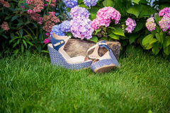 Beige sandals with blue soles lie. On the grass Royalty Free Stock Images