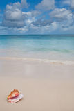 Beige Shell auf weißem Sandstrand nahe blauem Ozean Lizenzfreies Stockbild