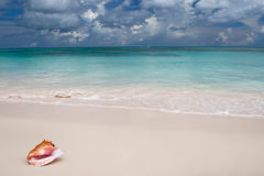 Beige Shell auf weißem Sandstrand nahe blauem Ozean Stockfoto